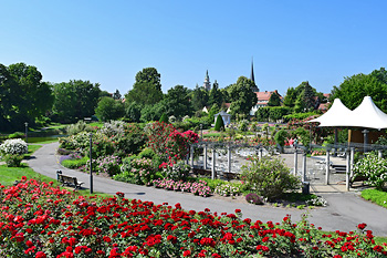 Rosengarten in Bad Langensalza